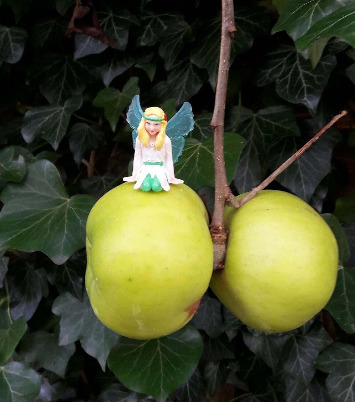 How did Belle harvest apples?