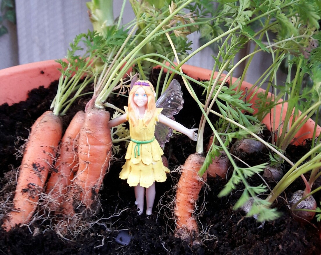 Have you read 'Make a fairy bunting with Lily!'?  What did the fairies cook with the carrots they harvested?